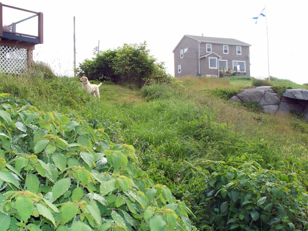 Landscaping Services in Peggy's Cove: Before
