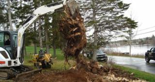 Stump Removal Landscaping in Halifax, NS